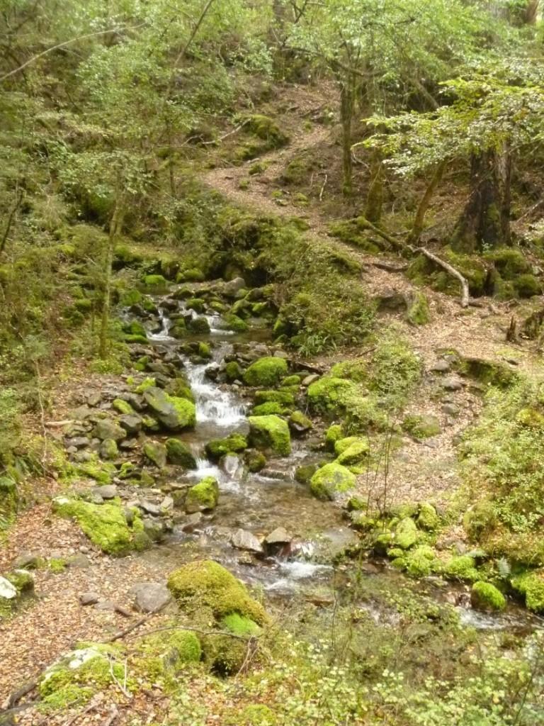 Lake Sumner Forest