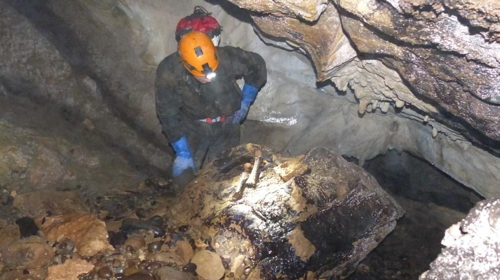 Inspecting some bones